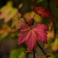 autumn-syksy-longinoja-helsinki-leaf-visithelsinki-finnishnature-finland-lumix-luonto-luontokuva-ins