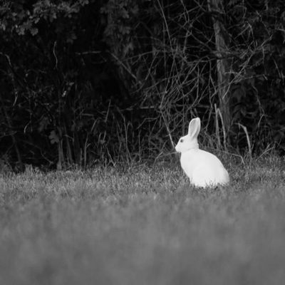 bunny-rabbit-white-citykani-bw-blackandwhitephotography-blackandwhite-night-helsinki-longinoja-finla