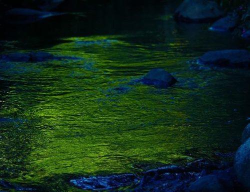 Ilta-auringon säteet ja ympäröivä luonto värjäävät puron välillä satumaiseksi.
