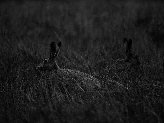night-longinoja-rabbit-animal-bw-blackandwhite-blackandwhitephotography-instaanimal-instanature-natu