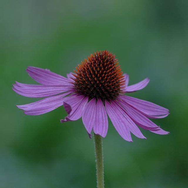 On typerää kuvata öisin kukkia teleobjektiivilla, mutta kaikilla meillä on omituisuutemme. #