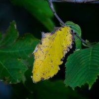 syksytulee-leaf-autumn-helsinki-finnishnature-finland-longinoja-nature-naturephotography-instanature