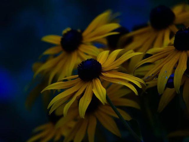 Vielä yksi kukkakuva, joka on nappastu yöllä.