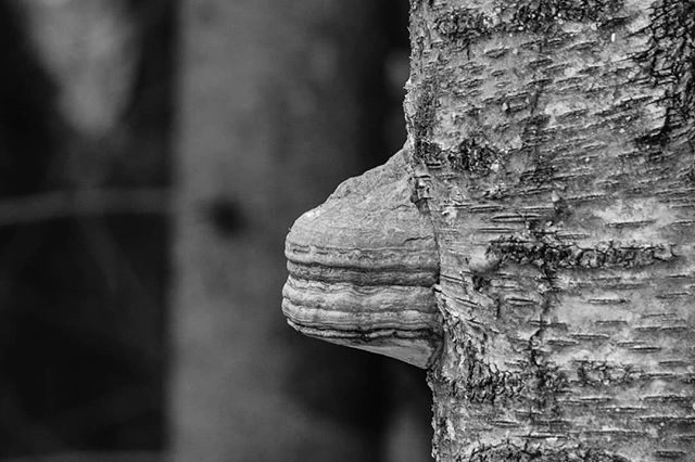 Face of tree.