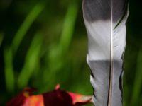 feather-sulka-forest-helsinki-finnishnature-finland-luontokuvaus-luonto-autumn-syksy-life-colors-nat