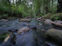 Iltakävely purolla. Sain tavata paljon purosta kiinnostuneita ihmisiä. Moni kertoi jo odottavansa mereltä saapuvia suuria taimenia. Lenkillä oli osan matkasta mukana myös Osku koira.