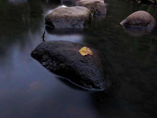 Leaf on river. Longinoja.fi