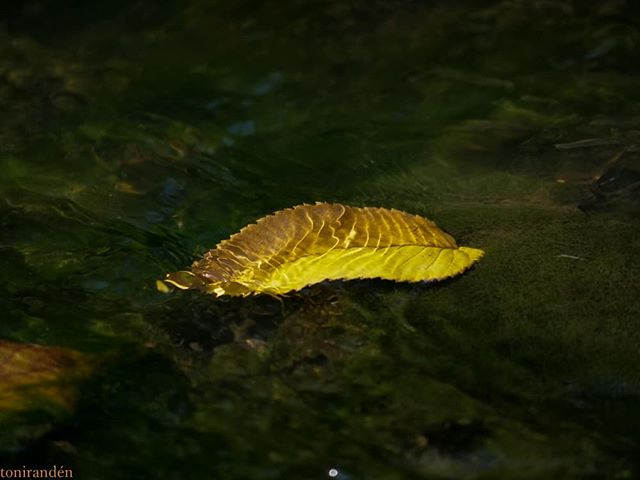 Leaf on water.