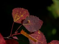 lehti-leaf-helsinki-visithelsinki-finland-finnishnature-natur-nature-naturephotography-naturelovers-