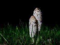 mushrooms-night-longinoja-helsinki-finland-finnishnature-visithelsinki-suomenluonto-suomi-nature-nat