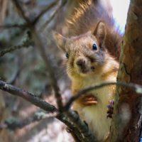 Nuori orava tarkkailee puron elämää. Tutustu longinoja.fi 🐿