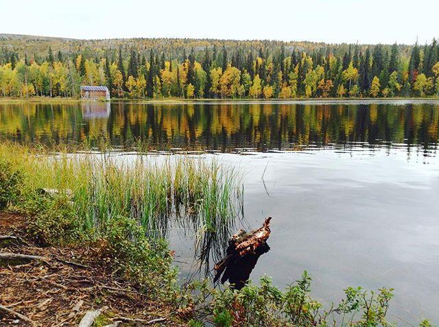 ruska-lapland-ilovelapland-nature-beautiful-amazing-tauonpaikka-nestlesuomi-weekend-longinojasyksy
