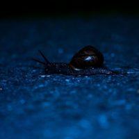 snail-longinoja-longinojasyksy-etana-blue-helsinki-finland-finnishnature-nature-naturephotography-na