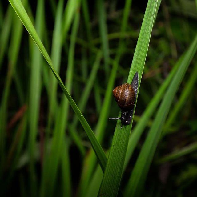 snail-night-longinoja-helsinki-finland-finnishnature-natur-nature-instaanimal-naturephotography-natu