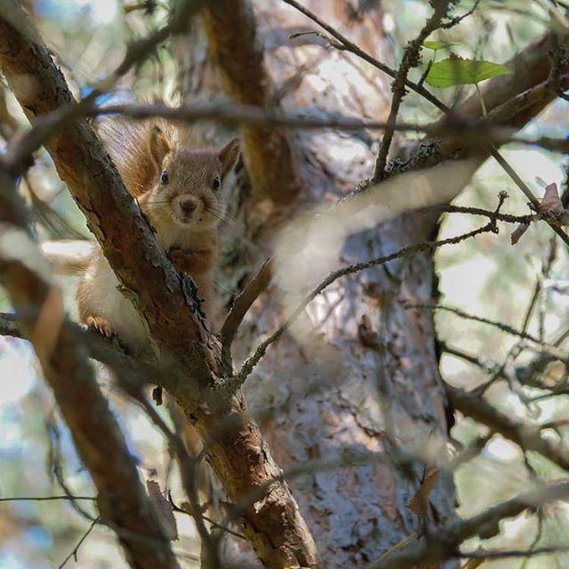Utelias pieni orava.
