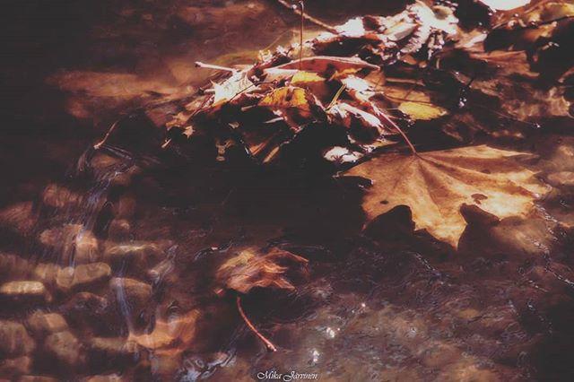Autumn / Syksy.