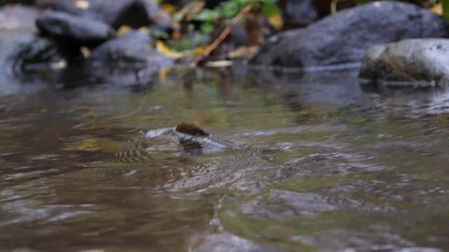 browntrout-taimen-video-instavideo-naturaleza-natur-nature-naturephotography-naturephotography-insta
