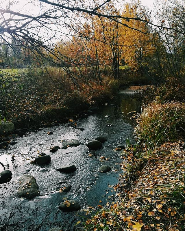 finnishnature-finland-helsinki-findbeautyineverything-beautyiseverywhere-nature-outdoor-dike-longino
