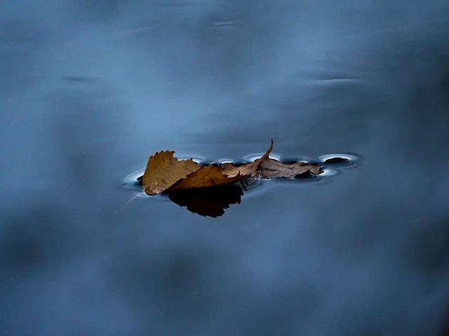 Hiljaa lipuu lehti usvaisella purolla. Surullisen kaunis.