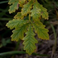 leaf-lehti-longinoja-longinojasyksy-helsinki-finnishnature-finland-natur-nature-naturephotography-na