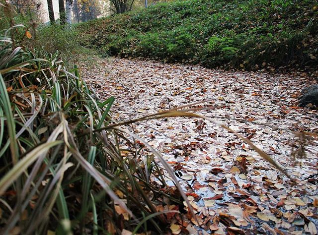 Leaves floating down a stream. Longinoja on nykyään lehtivirta. Osa uppoaa, osa ajelehtii Vantaanjokeen.