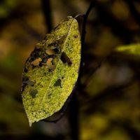 lehti-leaf-morning-monday-helsinki-longinoja-longinojasyksy-autumncolors-autumn-syksy-finnishnature-