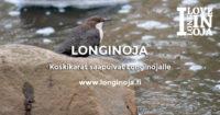 longinoja-koskikara-toni1