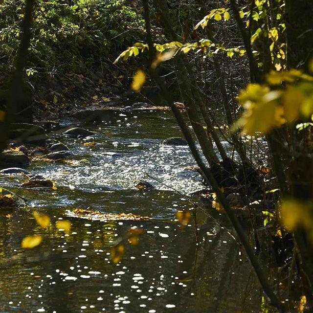 longinoja-syksy-luonto-yleluonto-luontokuvaus-luontokuva-suomenluonnonvalokuvaajat-sonyalphasuomi-so
