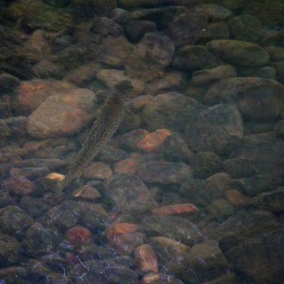 Longinojalla paikallinen herraskala etsii naisseuraa tositarkoituksella. Jos huomenna olen kuumeeton, niin painun tsekkaamaan onko tullut seuraa.  #