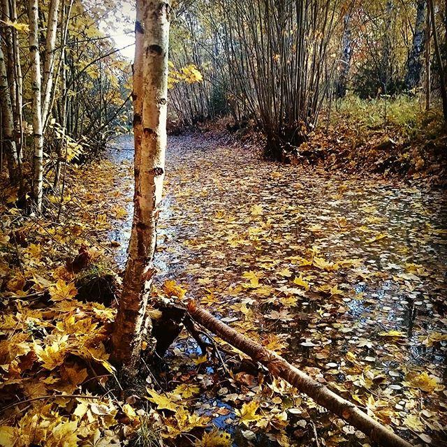 My favorite creek in autumn colors.