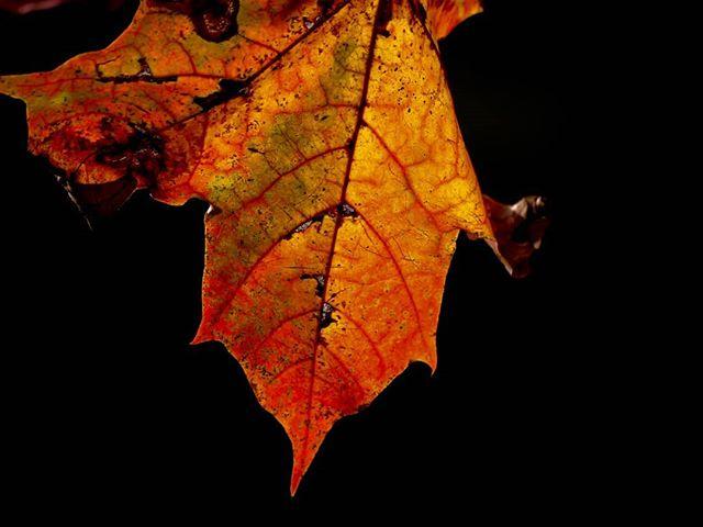 syksy-leaf-longinoja-longinojasyksy-helsinki-finland-luonto-luontokuva-autumn-love-varit-malmi-natur
