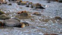 Tunnin pikavisiitti purolla. Paljon ihmisiä purolla katsomassa kaloja ja koskikaroja