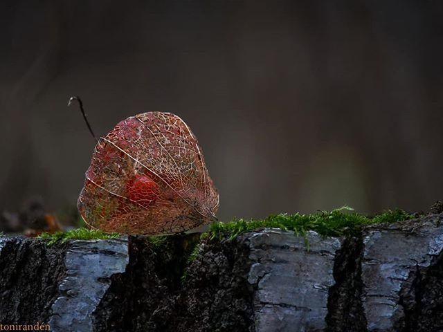 autumncolors-autumn-leaf-syksy-luontokuvaus-luonto-suomenluonto-longinoja-helsinki-metsa-forest-natu-1