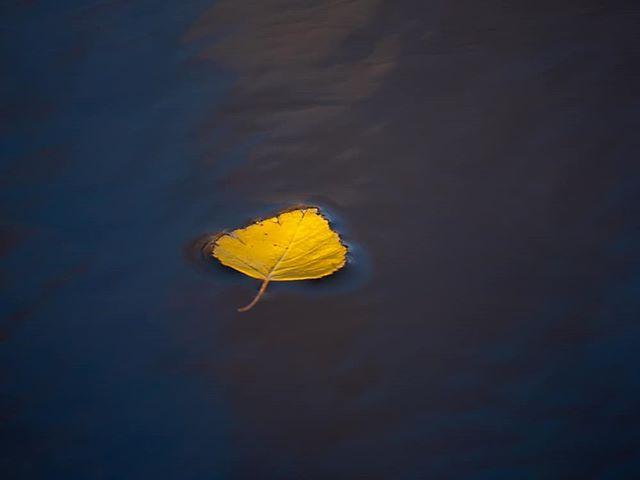 Leaf on water.