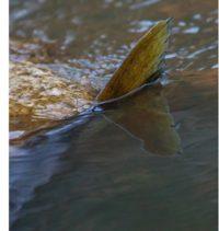 longinoja-longinojasyksy-taimen-trout-kutu-spawn-salmotrutta-puro-sream-creek-nature-naturephoto-nat