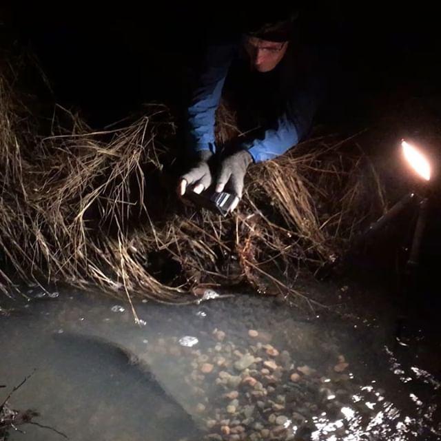 longinoja-taimenkuiskaajat-fallkulla-taimen-trout-spawning