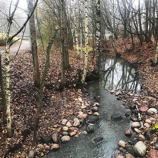 Malminseudun luontokohteet ovat vähissä, mutta yksi on, ja se on hieno, oma taimenpuromme Longinoja. - Today I participated a walk at rivulet Longinoja. Longinoja is the best nature area at Malmi.