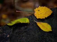 Syksyn värejä voi vielä löytää vaikka harmaata ja sateista onkin.