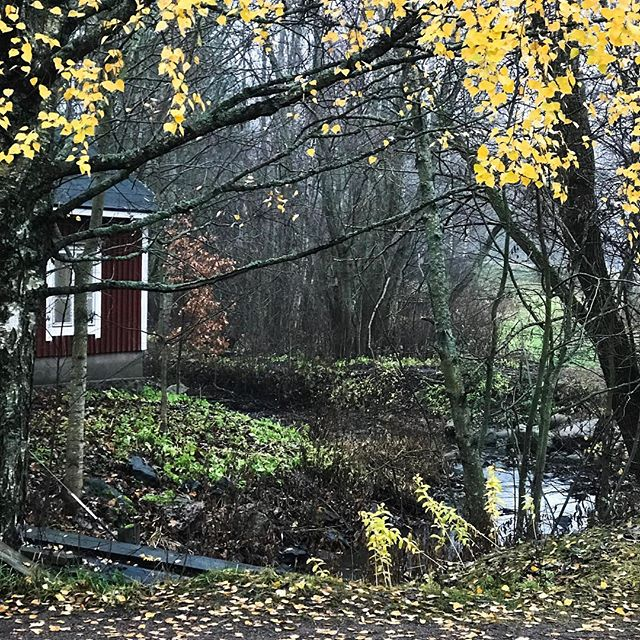 Tänään palasin Longinojalle. Kävelimme Latokartanontien kohdalta alajuoksulle, kunnes Longinoja laskee Vantaanjokeen. Pilvisenä päivänä ilmansuunnat katoavat mielestä. Ei kannata kuvitella tietävänsä missä kulkee. Edellinen kerta, kun olen eksynyt Helsingissä on kouluvuosilta. 🤣 No, onneksi on tiheä julkisen liikenteen verkko. - Today I went back to the brook trout Longinoja. The main chanannel is six kilometer long. Now we walked towards river Vantaanjoki where the brook runs into. We walked slowly and quiet and enjoyed the good weather.