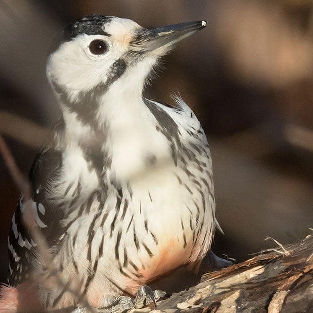 Upea lintuvieras havaittu Longinojalla. Lue lisää www.longinoja.fi Kuva: Sanna Kailio