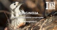 valkoselkatikka-longinoja-sanna-kailio