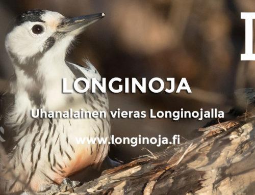 Uhanalainen vieras Longinojalla koskikarojen seurana