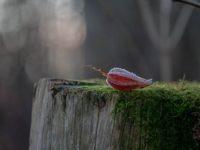 leaf-metsa-longinoja-lauantai-forest-hiking-luontopolku-malmi-helsinki-finland-finnishnature-luonto-