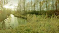 longinoja-stream-river-freeze-fog-cold-sun-light-peace-nature
