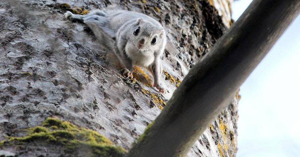 longinoja-liito-orava-seppo-leinonen-5