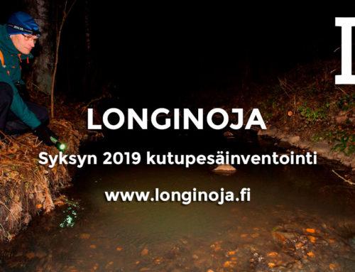 Longinojalla 60 taimenen kutupesää – Onnistuuko lisääntyminen myös Fallkullan alueella?